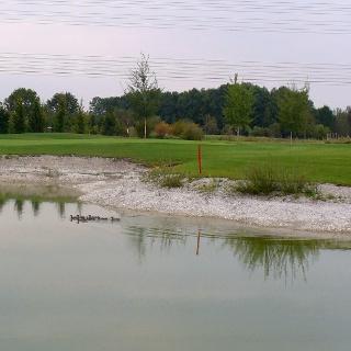 Golf-Enten