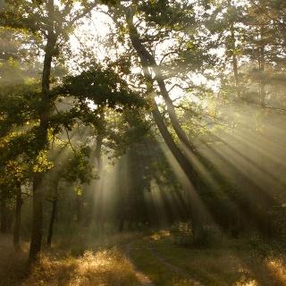 Wir wandern durch den dichten Wald bei Rathenow.