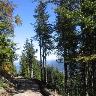 Schattiger Wanderweg im Rottauer Tal