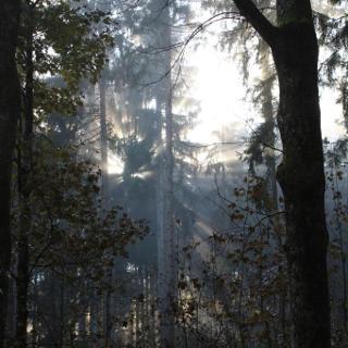 Herbstwald unterweges zur Tutzinger Hütte