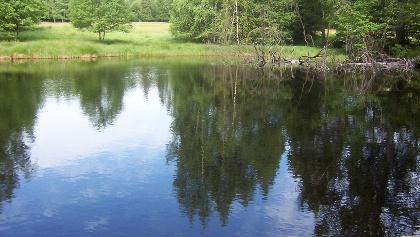 Idyllischer See am Molkenhaus.