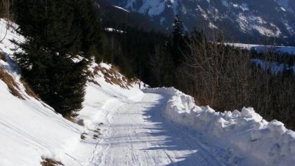 Bei der Rodelabfahrt genießen wir imposante Ausblicke auf die umliegende Bergwelt.