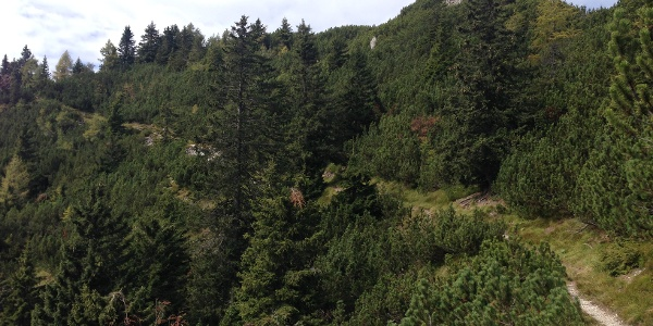 Weg zwischen Jepzasattel und Schwarzkogel