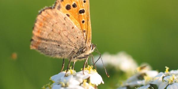 Mit etwas Glück kann man einen schönen Schmetterling entdecken.