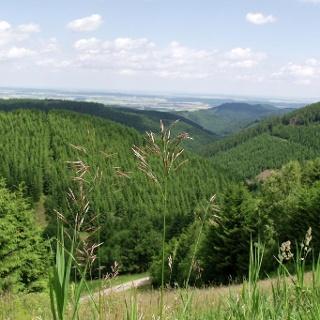 Heilklima-Wandern