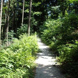 Wir wandern durch den Nationalpark Eifel von Hellenthal nach Einruhr.