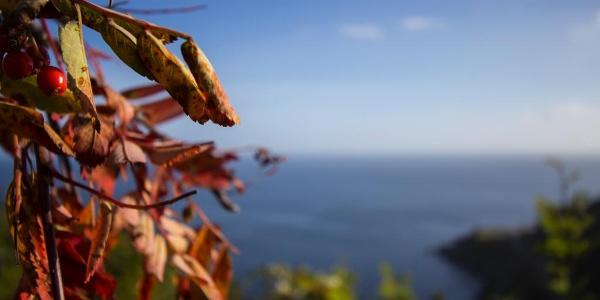 Herbst in den Lofoten.
