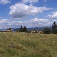 An der Milseburg bieten sich uns herrliche Panoramablicke.