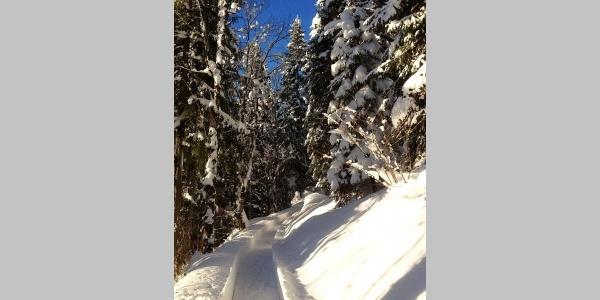 Auf dem Lindeweg im Winter