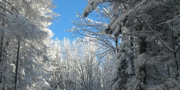 Winter Hohe Wand