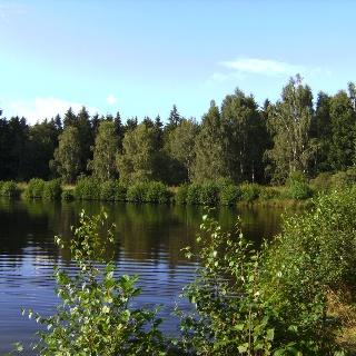 Idyllisch liegt der Ochsensumpfteich im Wald.