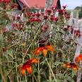 Farbenpracht in Bauerngärten.