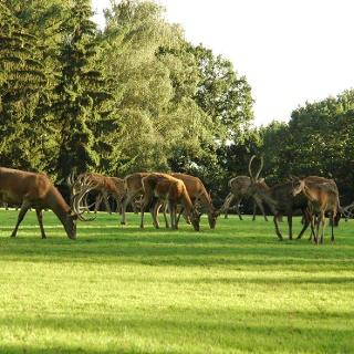 Im Wildpark von Poing lassen sich vor allem einheimische Wildarten von Nahem beobachten.