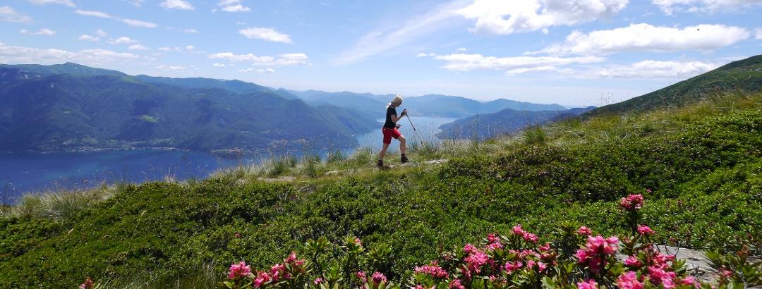 Aufstieg zwischen Alpenrosen und Lago Maggiore