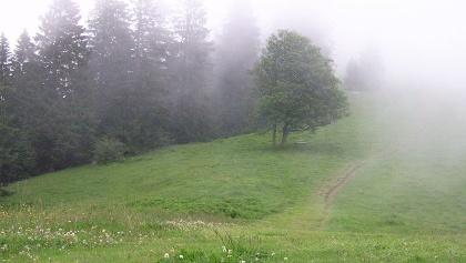 Der Weg über den Grasrücken zur Neureuth.