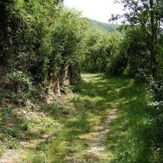 Auf wanderfreundlichen Wegen folgen wir dem Töpener Bach, dem Tannbach und der Saale.