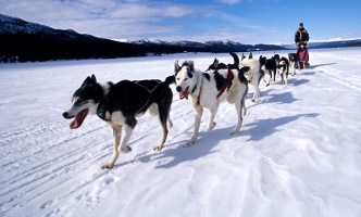 Dog sledging - Adventoura High Tatras