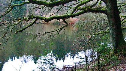 Unsere Wanderung führt an romantischen Waldseen entlang.