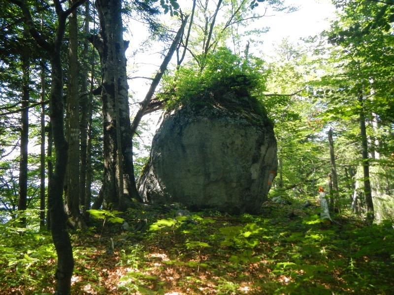 Bewachsener Naturstein im Wald