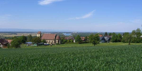 Blick auf den Rhein bei Müllheim