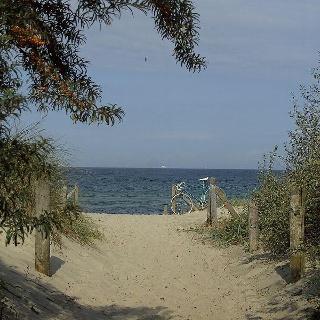 Von Sanddorn gesäumter Strand