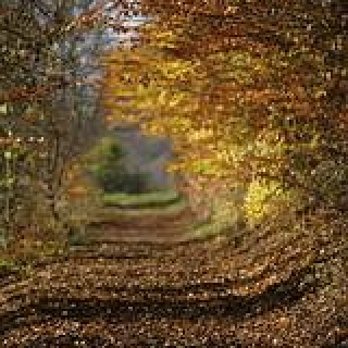 Herbstliches Farbenspiel.