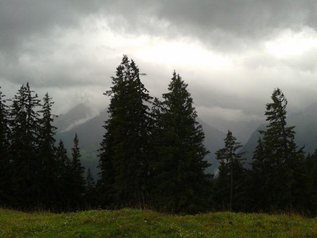 Heimische Wälder bei Bischofswiesen