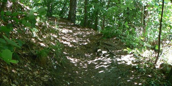 Waldweg zur Ruine Hohenfels.