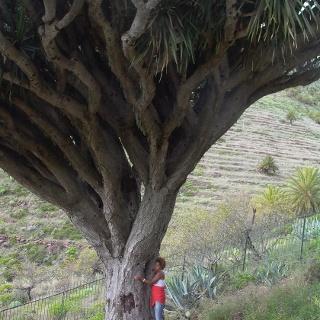 Ich und der heilige Drachenbaum