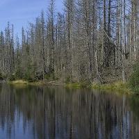 Die Reschbachklause ist die größte Triftklause innerhalb des Nationalparks und wurde noch 1950 genutzt.