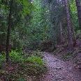 Wir wandern durchs Frauenholz zum Schokoladenfelsen.