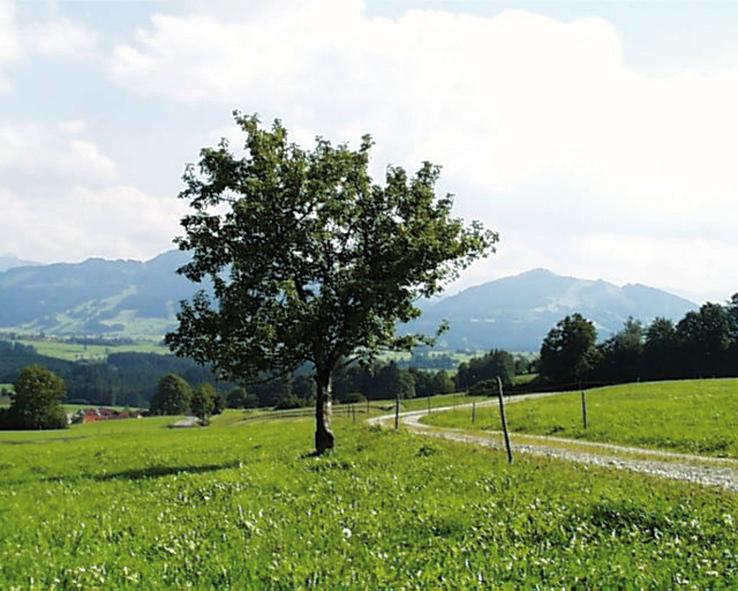Unser Weg verläuft durch saftige Wiesen.  - @ Autor: Gemeinde Oy-Mittelberg  - © Quelle: Outdooractive Redaktion