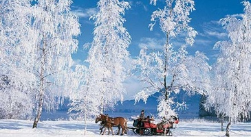 Carriage rides / Sleigh rides