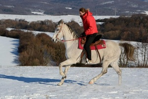 Horse ride Veľká Lomnica