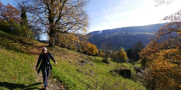Wandern durch die sanfte Voralpenlandschaft