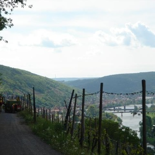 Durch die Weinberge geht es hinab nach Klingenberg.