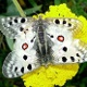Uttendorf-Schmetterlingslehrpfad