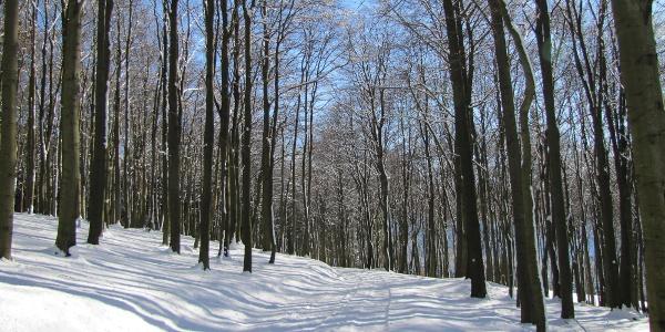Buchenwälder im Schnee