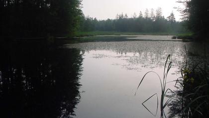 Der Filzbuchweiher liegt mitten im Wald.