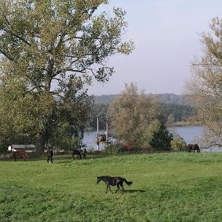 Die Pferde fühlen sich am Ufer des Binnensees wohl.