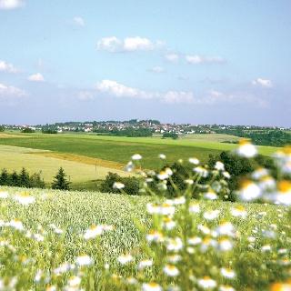 Auf dem Westwall-Radweg jahren wir durch diese liebliche Hügellandschaft.