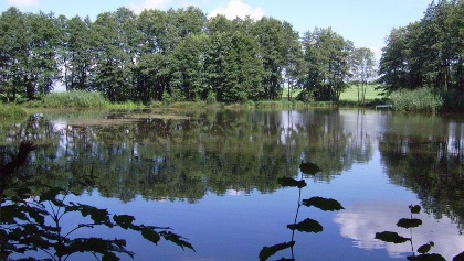 Die Bäume spiegeln sich auf der Wasseroberfläche des Hasenweihers.