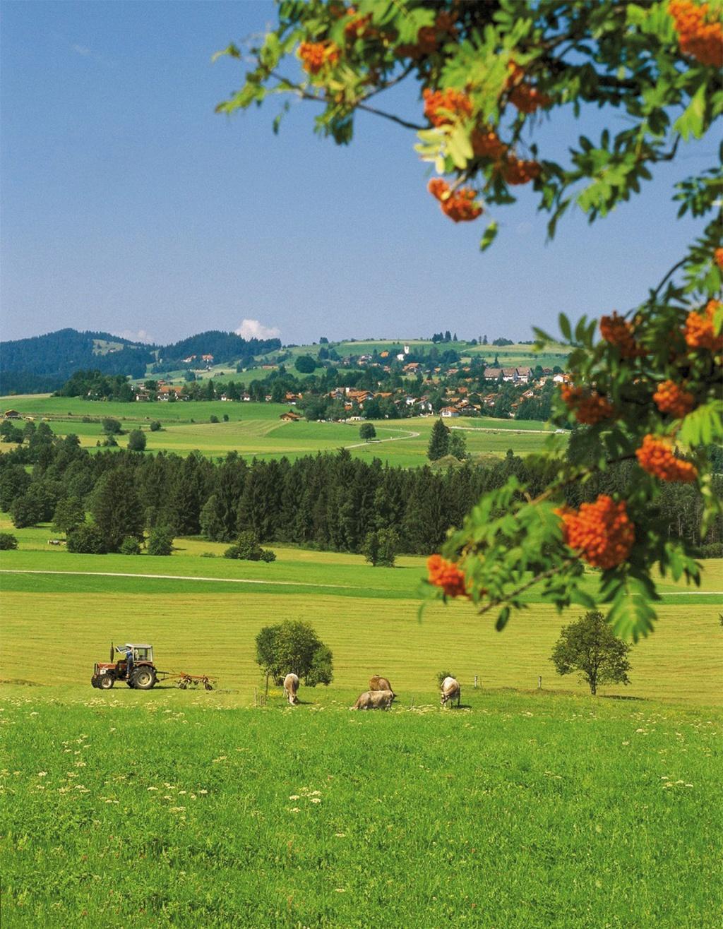 Unser Blick schweift über die wunderschöne Landschaft.  - @ Autor: Gemeinde Oy-Mittelberg  - © Quelle: Outdooractive Redaktion