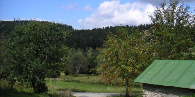 Die Arberhütte liegt auf einer Lichtung mit Streuobstwiese.