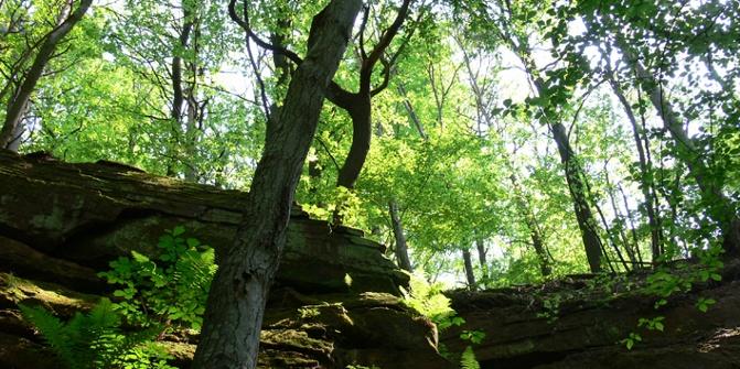 Herrliche Laubbäume und bizarre Sandsteinformationen bestimmen die Landschaft des Pfälzerwalds.