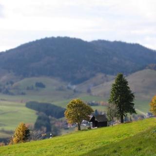 Die Schutzhütte Steinenkrätz und der Ortstteil Riggenbach.