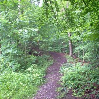 Auf schönen Waldwegen wandern wir.