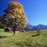 Die Natur Bayerns bietet uns unvergleichliche Anblicke.