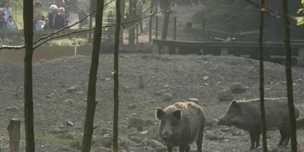 Heimat - Tierpark Olderdissen