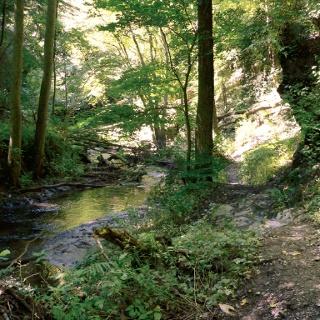 Auf schmalen, schattigen Pfaden wandern wir durch das idyllische Baybachtal.